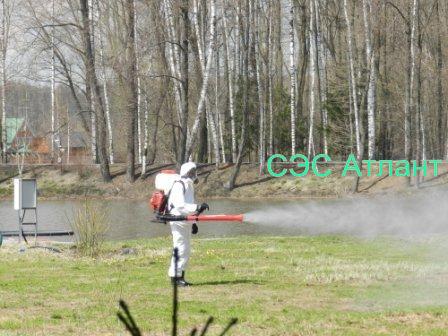 Профессиональное уничтожение комаров