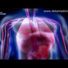 Бактерии - убийцы. Топ 10 самых опасных бактерий, вирусов человека. Discovery